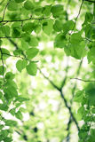 Green leaves background Stock Image