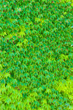 Green leaves background. Stock Image