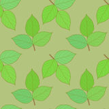 Green Leaves. Leaves on a green background Royalty Free Stock Images