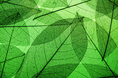 Free Green Leaves Background Stock Photos - 60233503