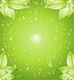 Green Leaves Background Stock Images