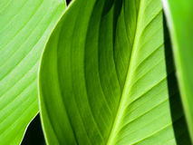 Green leaves background. Stock Photography