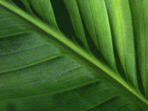 Green leaves background. Royalty Free Stock Photography