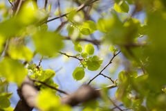 Green leaves background. Beautiful spring green tree leaves Stock Photo