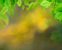 Green leaves background Royalty Free Stock Image