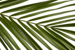 Green leaves for background Royalty Free Stock Photo