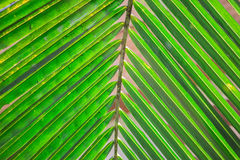 Green leaves background. Royalty Free Stock Photos