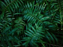 Abstract nature green leaves bush pattern in dark color tone. Green leaves background with dark color tone. Abstract nature tropical leaves bush pattern stock photography