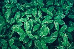 Green leaves background design.Flat lay.Top view of leaf.Nature Royalty Free Stock Images