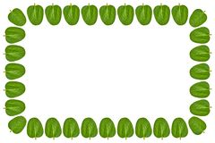 Green leaves background, frame and border, copy space photo stock photos