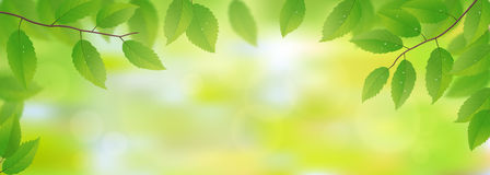 Green leaves background. Fresh green leaves background, vector illustration Royalty Free Stock Photography