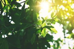 Green leaves background. Royalty Free Stock Images
