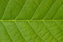 Green leaves background. Horizontal location Royalty Free Stock Photo