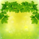 Green  leaves background . Stock Photos