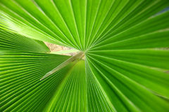Green leaves background Royalty Free Stock Photo