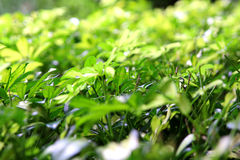 8green leaves background in sunny day. Stock Images