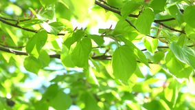 Green leaves background in sunny day. 4K stock footage