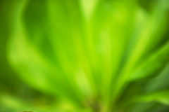 Green leaves - background royalty free stock photos