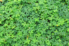 Green leaves background. Stock Photos