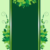 Green leaves. Background with twigs and green leaves Stock Images
