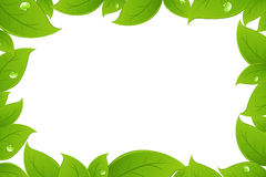 Green Leaves Background. Vector Stock Photo