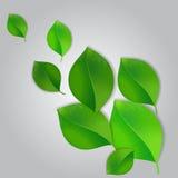 Green leaves, background. Vector illustration Stock Photo