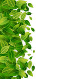 Green leaves background, vector Royalty Free Stock Image