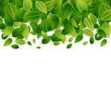 Green leaves background, vector Royalty Free Stock Images