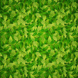 Green leaves background, vector Stock Photo