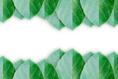 Green leaves background Royalty Free Stock Photography