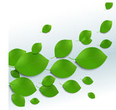 Green leaves background in white and blue colors Stock Images