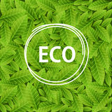 Green leaves background with word ECO in circle frame. Ecological concept. Vector illustration Stock Image