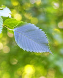 Green leaves with background yellow bokeh Royalty Free Stock Photo