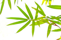 Green leaves bamboo background Stock Photography