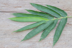 Green leaves bamboo Stock Photo