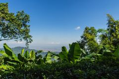 Green leaves of banana, bamboo and tree frame with blue sky background and copy space. Nature frame of green leave branches on blu. E sky. Green leaves of the Royalty Free Stock Image