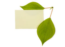 Green leaves with banner Royalty Free Stock Photography