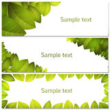 Green leaves banners set Royalty Free Stock Photo