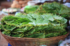 Green leaves in a basket India Royalty Free Stock Photo