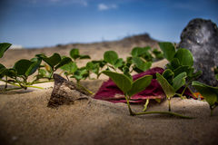Green Leaves in Beach. With a red cloth in between in the sand Royalty Free Stock Images