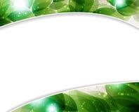 Lush foliage Stock Image