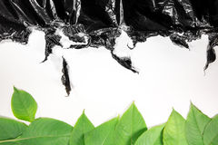 Green leaves and black plastic on a white background Royalty Free Stock Photo