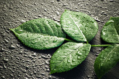 Green leaves on black stone Stock Photography