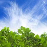 Green leaves, blue sky Stock Images