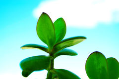Green leaves. And blue sky Royalty Free Stock Image