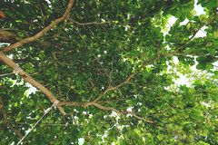Green leaves blue sky. Green leaves in the blue sky Royalty Free Stock Photo