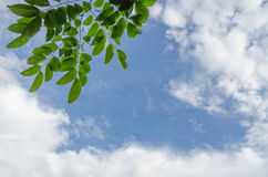 Green leaves on blue sky with cloud. Fresh green leaf foliage taken against a background of light blue azure sky. Clean composition with copy space for text stock photography