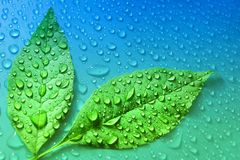 Green leaves on blue water drop background ecology energy of pla. Nt life organic life Stock Photography