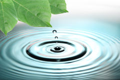 Green leaves and blue water drops. Royalty Free Stock Photo