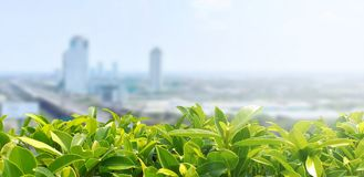 Green leaves with  blur city background. Green leaves blur city background landscape cityscape oxygen co2 pm 25 condo light air sky cloud blurred leaf blue stock photos